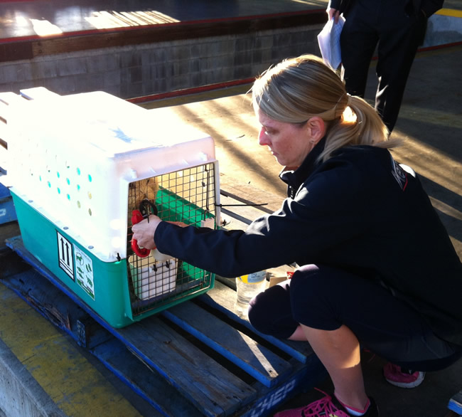 Image of Sparky loading for pet travel from Australia to the USA