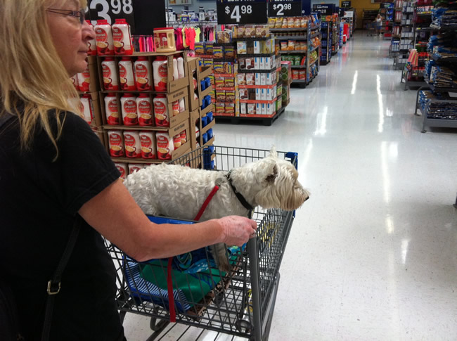 Image of our dog in Walmart