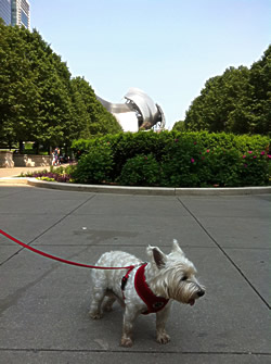 Image of our dog outside Millennium Park Chicago