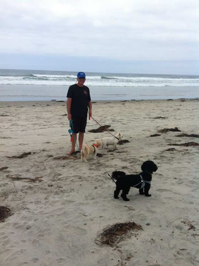 Dog friendly beach - Cardiff Beach in Southern California