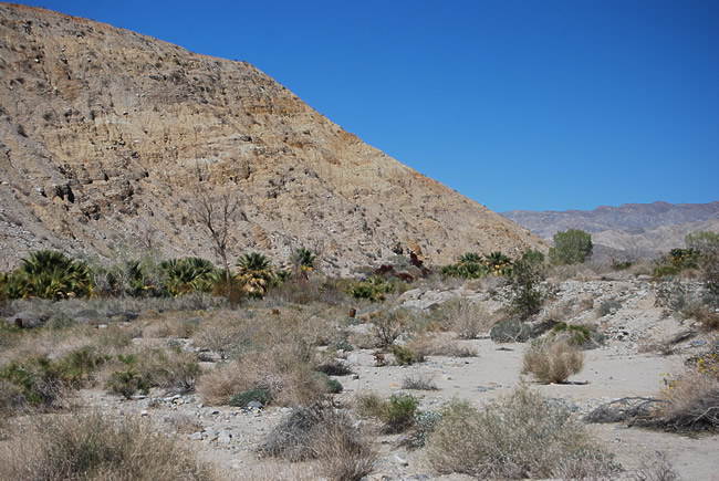 Image of San Andreas Fault located in Coachella Valley Preserve near Palm Springs RV parks