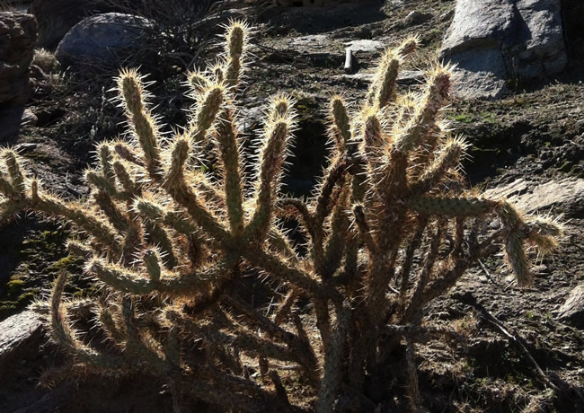 Image of desert plants flourishing in Andreas Canyon near Palm Springs