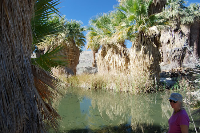 Freshwater spring at Coachella Valley Preserve near Palm Springs RV Resort